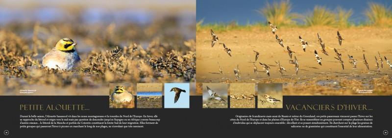 double-pages-d-f-oiseaux-3453
