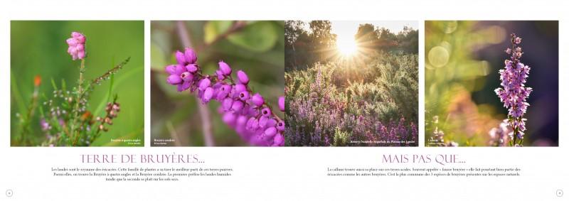 double-pages-l-p-landes-3452