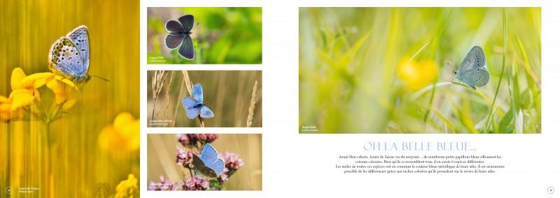 double-pages-l-p-papillons-3454