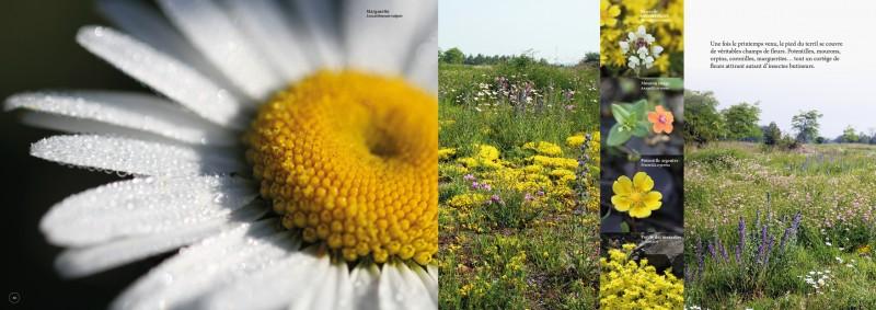 double-pages-t-c-fleurs-3455